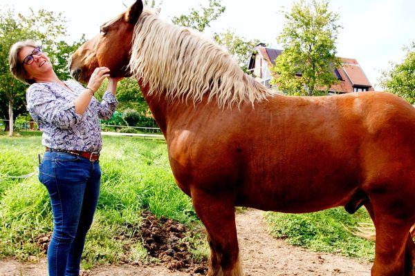 Le cheval Sésame dans le verger attenant au domaine. A l'arrière-plan, on aperçoit le gîte des Holler.