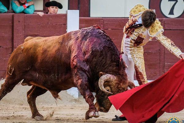 Samedi 25 mai 2019, Madrid, toro de Pedraza de Yeltes. La naturelle selon Juan Leal.