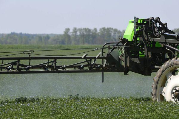 Pulvérisation de pesticides dans un champ de lin en France