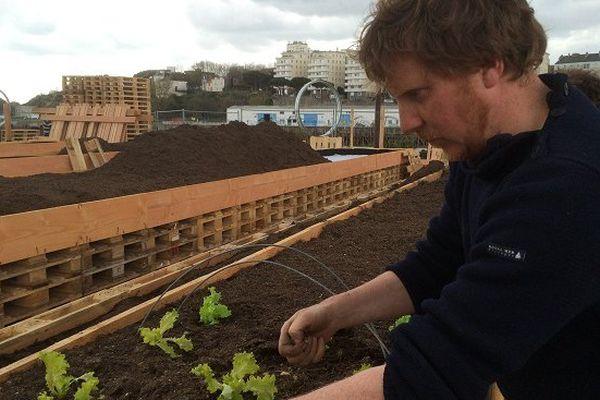 Olivier Durand maraîcher, plante les salades sur le potager de la cantine