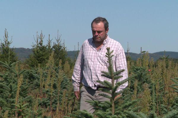 Christophe Mauny, dans ses plantations de sapins de Noël à Brassy (Nièvre)