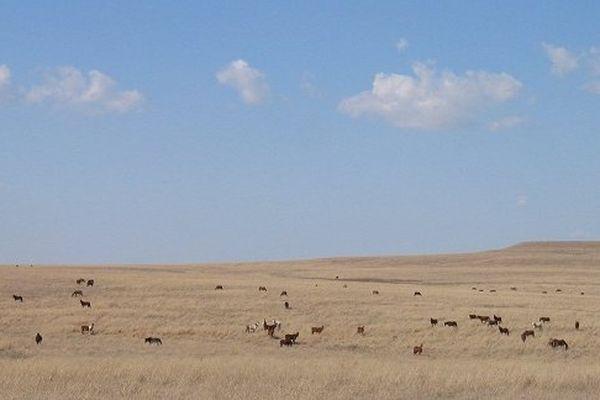 Prairie des Hautes-herbes de la réserve indienne Osage près de Pawhuska – Oklahoma