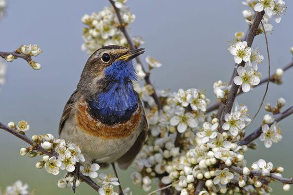 Reconnaître, compter et observer les oiseaux durant le confinement