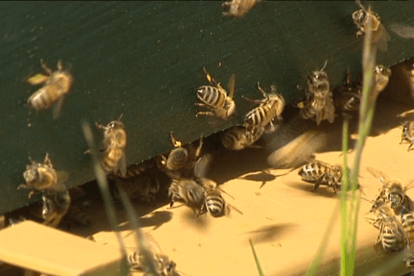 Dans ce petit paradis se trouvent une quarantaine de ruches. Mais en 2015, toutes les colonies qui y vivaient ont péri. La cause ? Une intoxication aux pesticides, les néonicotinoïdes.