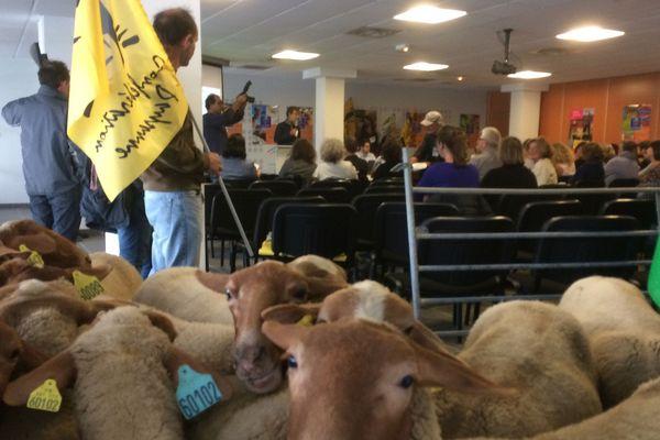 Les éleveurs de moutons bio montent au créneau à la chambre d'agriculture de Carcassonne.
