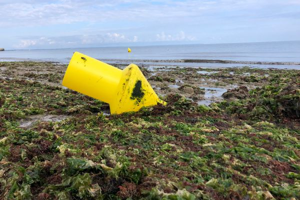Accumulation d'algues vertes sur la plage de Grandcamp-Maisy (Calvados)
