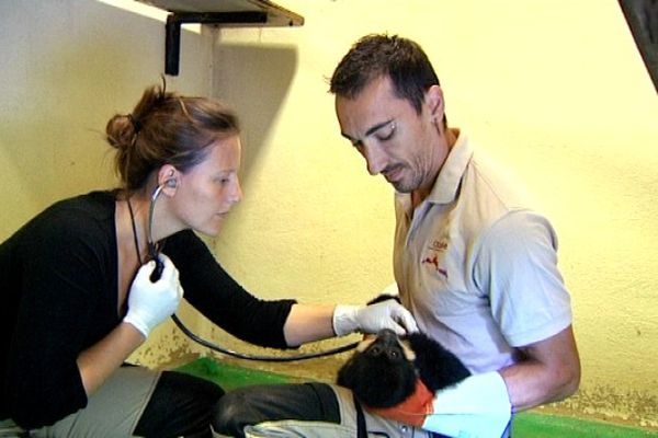 Mélanie Berthet, vétérinaire, et Christophe Ronot, chef soigneur au zoo de Besançon.