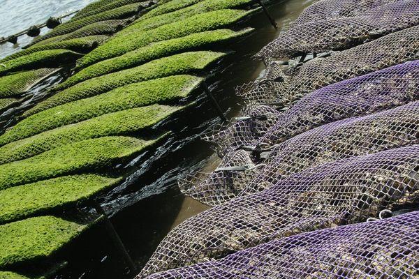 L'interdiction reste effective pour les moules, les coques et les pétoncles