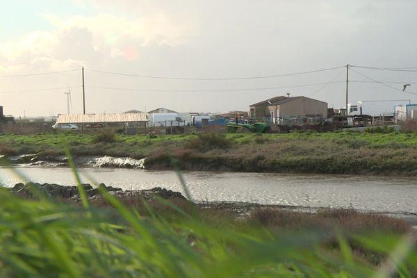 Entre marais et océan, le polder des Champs, situé au pied des éoliennes de Bouin, en Vendée.