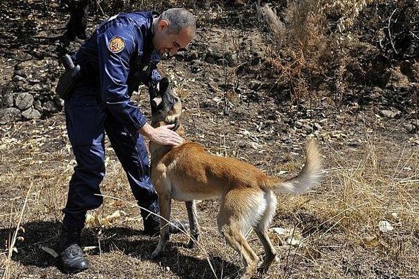 Saint-Hippolyte-du-Fort (Gard) - Drop, le chien spécialisé dans la recherche de produits accélérateurs, nouvelle arme fatale des gendarmes du Languedoc-Roussillon contre les pyromanes - juillet 2011