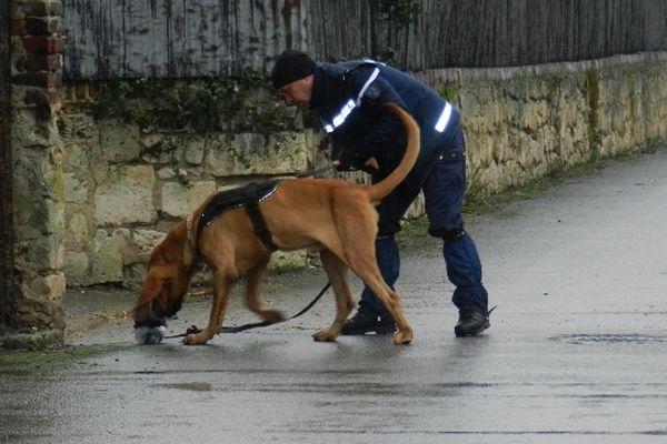 La gendarmerie est aidée de 8 chiens de la brigade cynophile pour retrouver Bruno