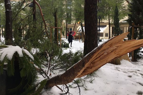 Le poids de la neige a cassé quelques branches dans le quartier Antigone à Montpellier - Mars 2018