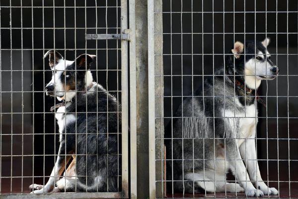 Deux chiens à la SPA de Lorraine. Photo d'illustration.