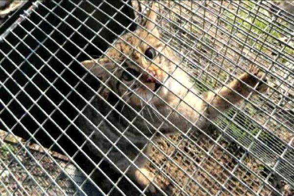 Haute-Saône : la fédération de chasse a détruit des centaines d 'animaux protégés