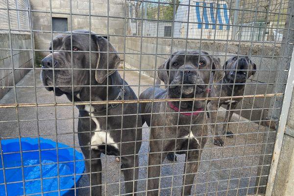 En attendant d'être fixé sur leur sort les chiens sont placés au refuge animalier bortois