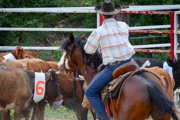 Stefano Baldon cowboy professionnel, aujourd'hui éleveur et entraineur de taureaux.
