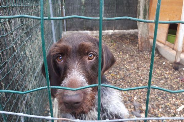 Pendant le confinement, il est possible de se déplacer à plus de 10 km pour adopter un animal dans un refuge.