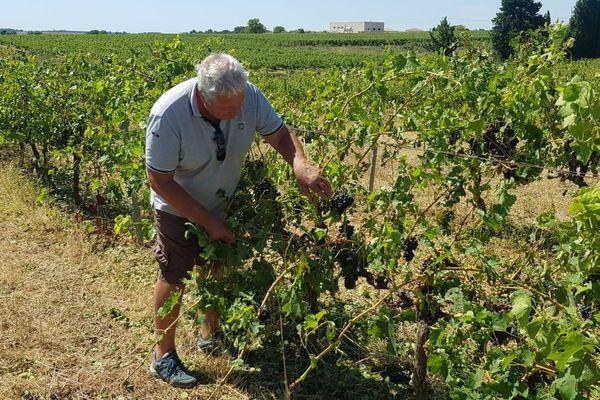 Boujan-sur-Libron (Hérault) - un vigneron constate les dégâts sur ses vignes après la grêle - 24 juillet 2020.