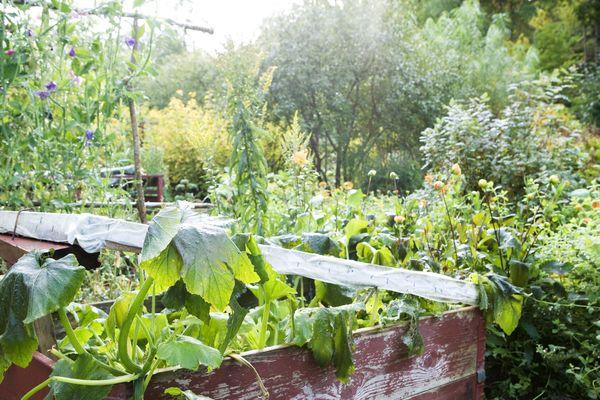 Un jardin.