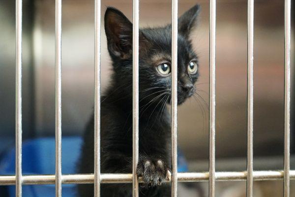 Un chaton derrière une grille sans doute à l'adoption.