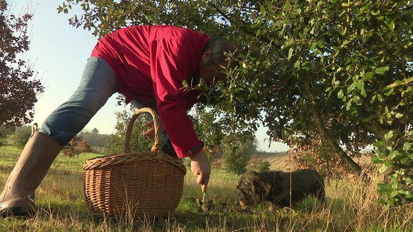 En Périgord, la trufficulture reste une activité à taille humaine, pratiquée par des passionnés plutôt que par des producteurs agro-alimentaire