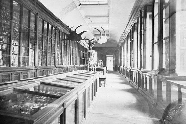 2 millions et demi d'objets dorment dans les réserves du Muséum de Toulouse
