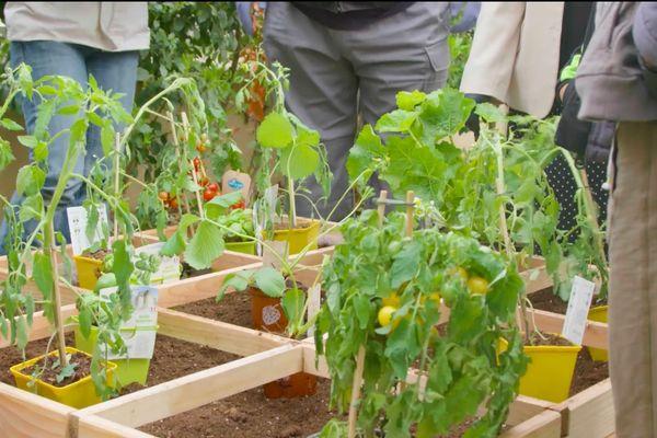 L'ambition de ce projet collectif est de présenter une autre vision du jardinage et de permettre à tous d'apprendre à jardiner en milieu urbain dans sa ville, dans son quartier, dans sa rue.
