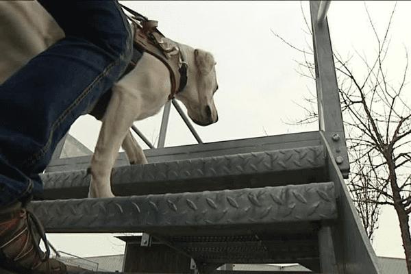Dans le sillage d'un chien guide d'aveugle