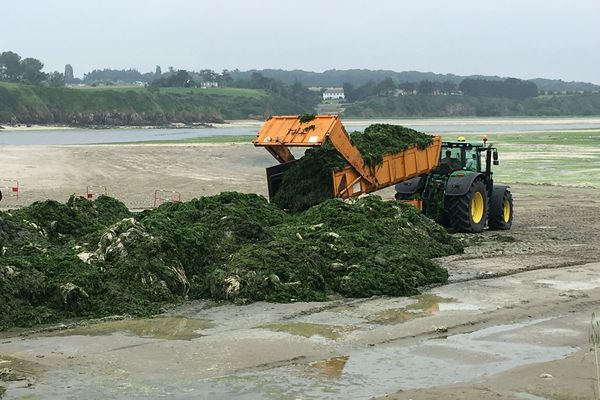 Ramassage d'algues vertes à Morieux