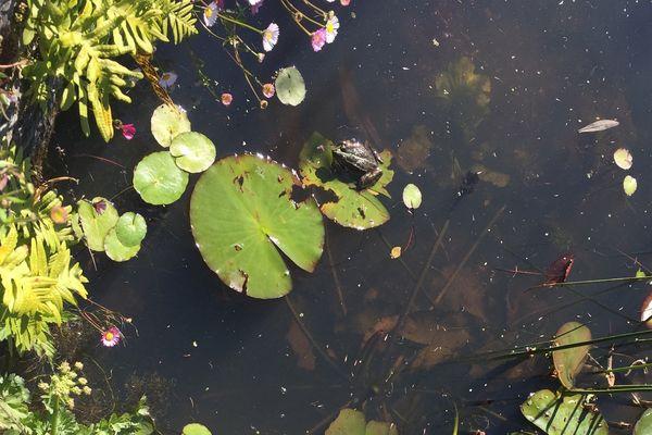 Au jardin des Plantes de Nantes, 3 espèces végétales en danger sont réimplantées dans leur milieu naturel