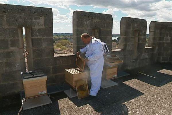 Six ruches ont été installées sur le toit du Palais des Papes d'Avignon.