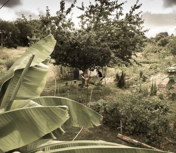 Le jardin de Christophe Gatineau à Compreignac en Haute-Vienne