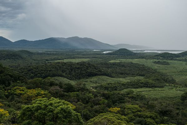 La photo de l'année 2017 désignée par Wikimedia Commons a été réalisée dans la forêt Atlantique, au Brésil, une zone menacée par la déforestation.