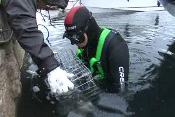 Comme Mèze, Port-Vendres, Le Barcarès , Vendres et Le Cap-d'Agde devraient s'équiper de ces cages-maison pour poissons juvéniles
