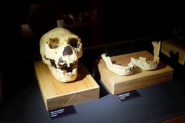 Le crâne de l'homme de Tautavel (Pyrénées-Orientales), vieux de 450 000 ans, a été découvert il y a 50 ans, le 22 juillet 1971.