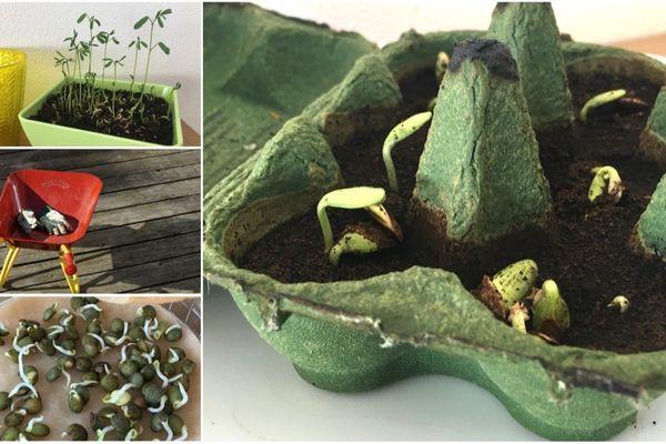 Faire pousser des lentilles et des graines de butternet, de quoi émerveiller les petits en même temps que leur offrir une belle séance de jardinage.