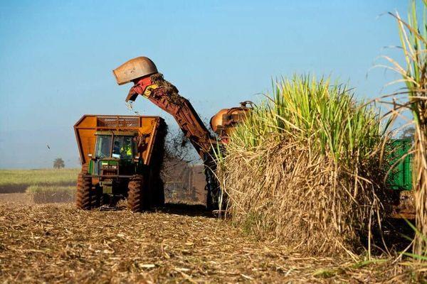 Le bioéthanol, produit en France, est issu de la fermentation des sucres et de l'amidon contenus dans les betteraves sucrières