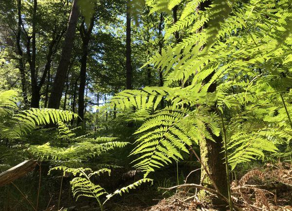 Depuis deux jours, plus aucune trace du Wallaby, aperçu dans la forêt du Gâvre.