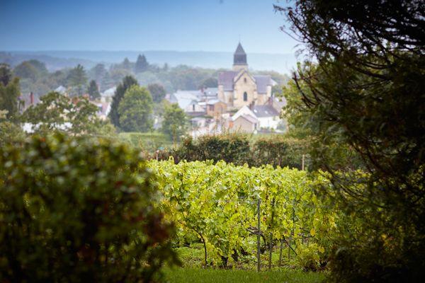 """Le vignoble champenois a inspiré Nicolas Vanier pour son prochain film """"Champagne !"""""""