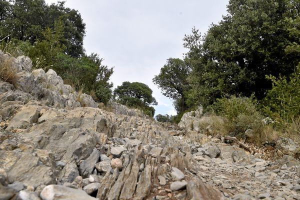 Sentier de randonnée sur le mont Hortus dans l'Hérault.