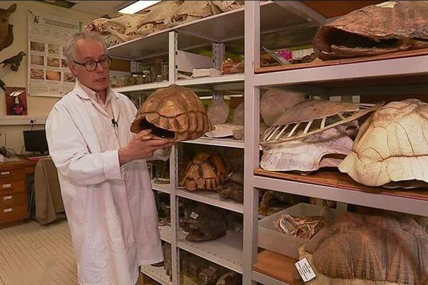 Le professeur Daniel Petit est conscient de la valeur d'une telle collection de zoologie, un fonds enrichi grâce à des dons de particuliers.