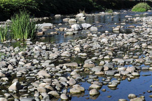 La Fecht dans le Haut-Rhin, comme de nombreuses rivières en Alsace, a vu son débit baisser drastiquement