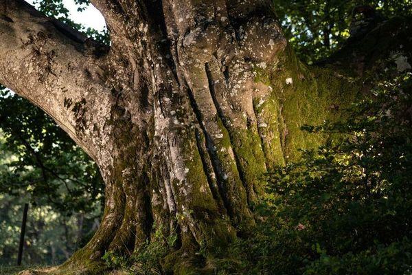 Durant l'été, les arbres sélectionnés ont fait l'objet d'une production photo par Emmanuel Boitier, photographe du magazine Terre Sauvage