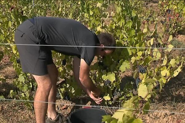 Frédéric Bernes, viticulteur à Lantignié, a choisi de travailler sous label bio.