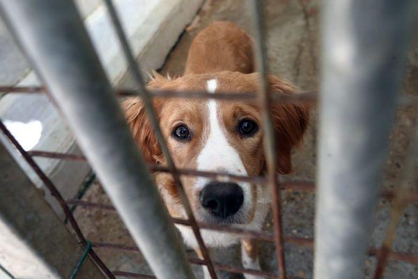 Les associations de protection estiment que 100 000 animaux seraient abandonnés chaque année en France, dont 60 000 durant l'été.