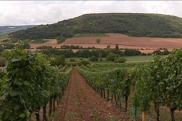 Le vignoble des Hautes-Côtes, sur la commune de Villars-Fontaine