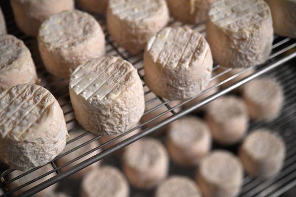 Photo d'illustration de fromage de chèvre.