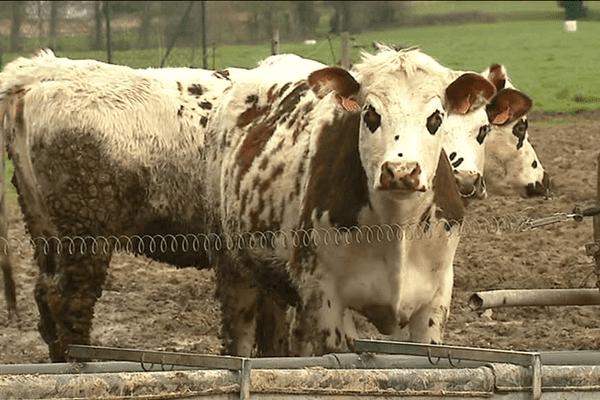 A Luitré (35) chez Denis Jehannin vice-président France Milk Board Grand Ouest