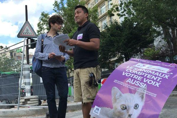 Dans la 4ème circonscription de Paris comme partout en France, le Parti animaliste a misé sur un chaton comme tête d'affiche pour sa campagne des législatives.