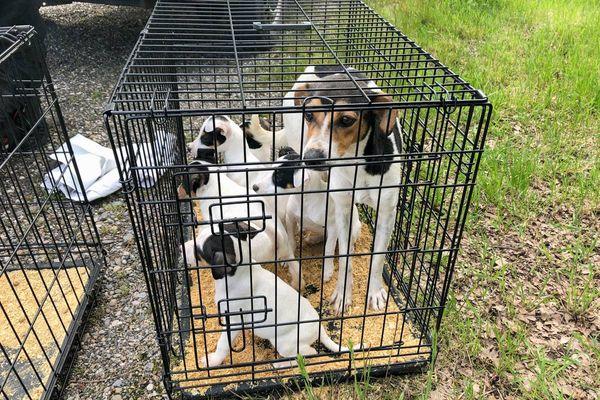 Ces chiots et leur mère, issus d'un trafic animaux, ont été recueillis et soignés par la SPA de Mulhouse.